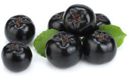 Chokeberry με το φύλλο που απομονώνεται στο άσπρο υπόβαθρο Μαύρο aronia Στοκ φωτογραφία με δικαίωμα ελεύθερης χρήσης