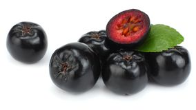 Chokeberry με το φύλλο που απομονώνεται στο άσπρο υπόβαθρο Μαύρο aronia Στοκ Φωτογραφίες