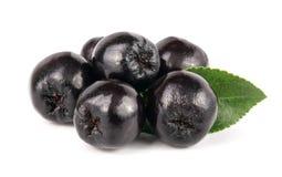 Chokeberry με το φύλλο στο άσπρο υπόβαθρο Μαύρα μούρα aronia Στοκ Εικόνα