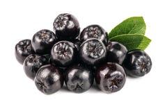 Chokeberry με το φύλλο στο άσπρο υπόβαθρο Μαύρα μούρα aronia Στοκ εικόνα με δικαίωμα ελεύθερης χρήσης