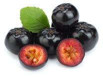 Chokeberry με το φύλλο στο άσπρο υπόβαθρο Μαύρο aronia Στοκ εικόνα με δικαίωμα ελεύθερης χρήσης