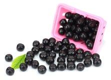 Chokeberry με το φύλλο στο ρόδινο καλάθι αγορών στο άσπρο υπόβαθρο Μαύρο aronia Στοκ Φωτογραφίες