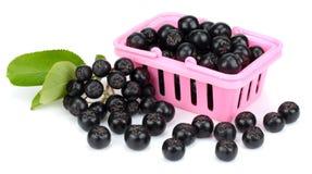 Chokeberry με το φύλλο στο ρόδινο καλάθι αγορών που απομονώνεται στο άσπρο υπόβαθρο Μαύρο aronia Στοκ Εικόνα