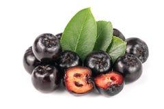 Chokeberry με το φύλλο στο άσπρο υπόβαθρο Μαύρα μούρα aronia Στοκ φωτογραφίες με δικαίωμα ελεύθερης χρήσης