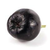 Chokeberry που απομονώνεται στο άσπρο υπόβαθρο Μαύρα μούρα aronia Στοκ εικόνα με δικαίωμα ελεύθερης χρήσης