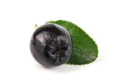 Chokeberry στο άσπρο υπόβαθρο Μαύρα μούρα aronia Στοκ εικόνα με δικαίωμα ελεύθερης χρήσης
