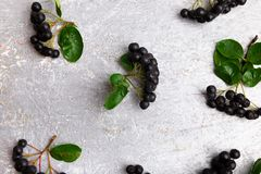 Chokeberry στο γκρίζο υπόβαθρο Μούρο Aronia με το φύλλο Τοπ όψη διάστημα αντιγράφων Στοκ φωτογραφία με δικαίωμα ελεύθερης χρήσης