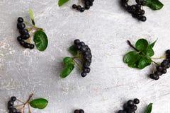 Chokeberry στο γκρίζο υπόβαθρο Μούρο Aronia με το φύλλο Τοπ όψη διάστημα αντιγράφων Στοκ Εικόνα