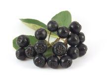 Chokeberry щетки с зелеными листьями Стоковое Изображение RF