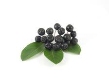Chokeberry щетки с зелеными листьями Стоковая Фотография