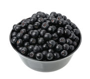 Chokeberry Royalty Free Stock Photo