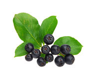 Chokeberry Stock Image