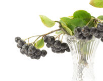 Chokeberry Stock Photography