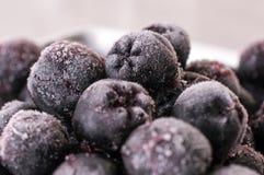 Chokeberry, Aronia Foto de Stock Royalty Free