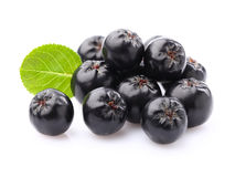 Chokeberry in closeup Stock Images