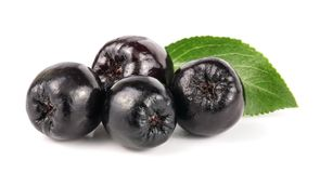 Chokeberry con la hoja aislada en el fondo blanco Bayas negras del aronia Fotografía de archivo