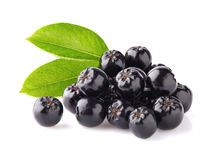 Chokeberry with leaves Royalty Free Stock Photography