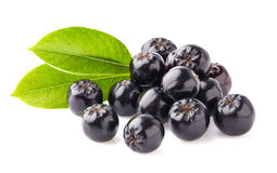 Chokeberry with leaves Royalty Free Stock Image
