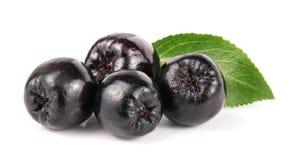 Chokeberry mit dem Blatt lokalisiert auf weißem Hintergrund Schwarze aronia Beeren Stockfotografie