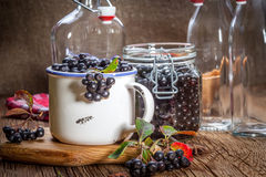 Chokeberry negro Imágenes de archivo libres de regalías