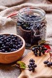 Chokeberry noir Image stock