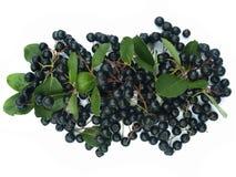 Chokeberry preto (aronia) Fotografia de Stock Royalty Free