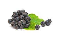 Chokeberry su una priorità bassa bianca Immagine Stock Libera da Diritti