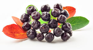 Chokeberry  on white Royalty Free Stock Images