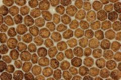 Choklad flagar med mjölkar bakgrund Arkivfoto