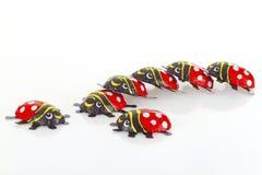 Choklad Ladybeetle Fotografering för Bildbyråer