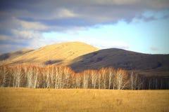 Choklad och orange kullar royaltyfria bilder
