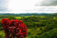 Chokladkullar, Bohol ö, Philippines Royaltyfri Fotografi