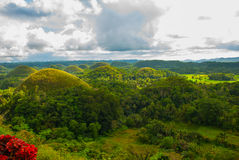 Chokladkullar, Bohol ö, Philippines Royaltyfria Bilder