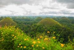 Chokladkullar och gula blommor, Bohol ö, Filippinerna Arkivfoton