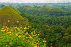 Chokladkullar och gula blommor, Bohol ö, Filippinerna Arkivbild