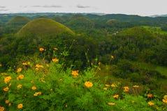 Chokladkullar och gula blommor, Bohol ö, Filippinerna Royaltyfri Bild