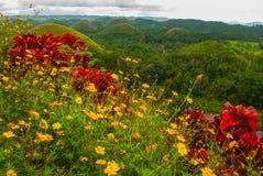 Chokladkullar och gula blommor, Bohol ö, Filippinerna Royaltyfria Foton