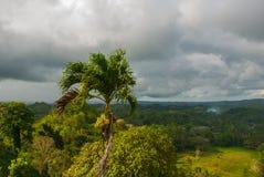 Chokladkullar och Palma, Bohol ö, Filippinerna Arkivfoton