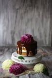Chokladlagerkaka med krysantemumet överst Arkivbild