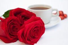 chokladrotea Royaltyfri Fotografi