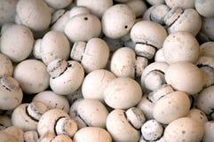 choc- mushrooms Royalty Free Stock Image
