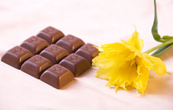 Chokolate and yellow tulip. Nine little chokolate bars on beige background with tulip Royalty Free Stock Photos