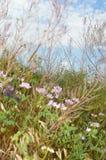 Chokrak Flecha de Arabatskaya de las flores Camino a los lagos de sal fotos de archivo