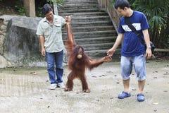 CHOLBURI THAILAND - JUNE13: unidenftify besökaren som spelar med Bo Royaltyfria Bilder