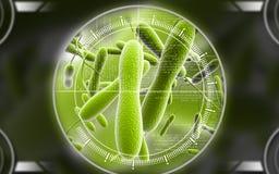 Cholera bacteria Royalty Free Stock Photo