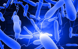 Cholera bacteria Royalty Free Stock Photos
