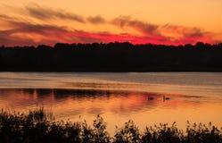 cholerny słońca Fotografia Royalty Free