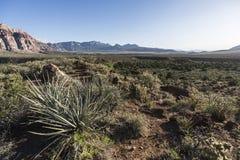 Red Rock Canyon Nevada Cholla Cactus Morning Royalty Free Stock Photo