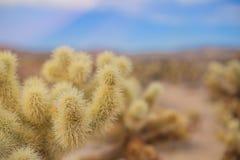 Chollas Joshua drzewa Kaktusowy park narodowy, Kalifornia Obraz Stock