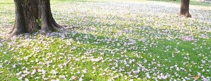 Chom-bajs-vits-spets blommabild Royaltyfri Bild